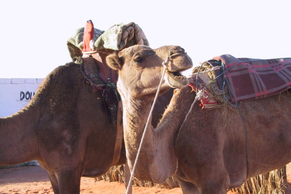 DocTrotter en Mauritanie : Transmauritanie