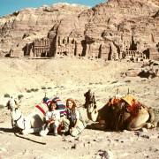 DocTrotter en Jordanie : Desert Cup 2002